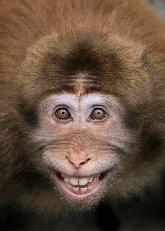 Animali che sorridono: i più simpatici dal regno animale / Image 6