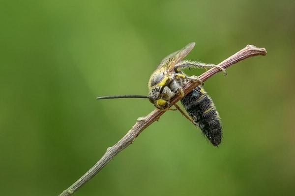 Il calabrone, affascinante ma un po' scorbutico!