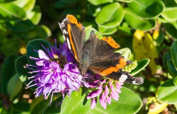 Le farfalle? Esistevano già 200 milioni di anni fa!