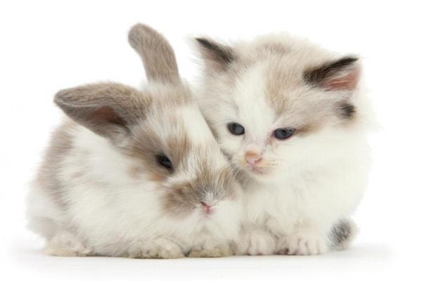 """Conigli e gatti """"gemelli"""": che teneri!"""