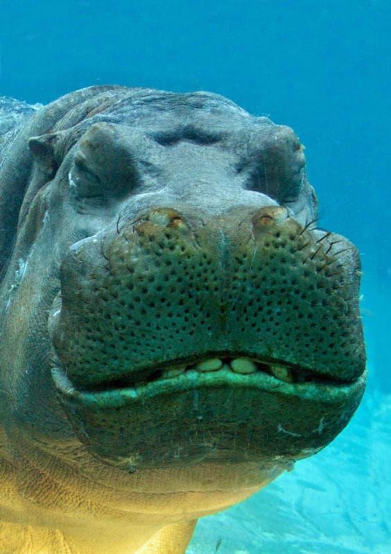 Animali che sorridono: i più simpatici dal regno animale / Image 7