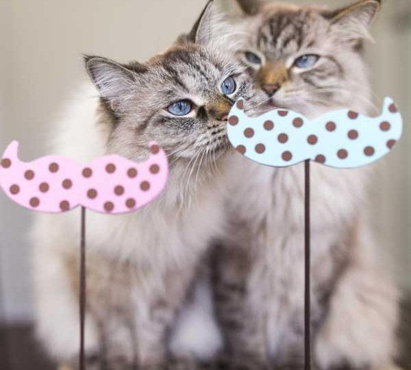Fotogallery | Andiamo alla scoperta dei gatti più divertenti!