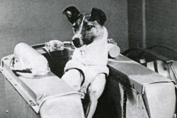 62 anni fa la cagnetta Laika veniva spedita nello Spazio!