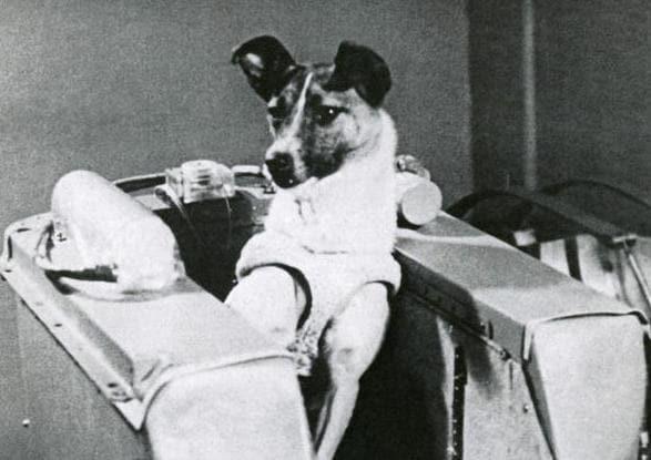 60 anni fa la cagnetta Laika veniva spedita nello Spazio!