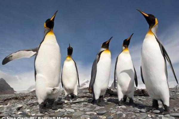 I pinguini volanti: video di come è stato realizzato lo scherzo della BBC