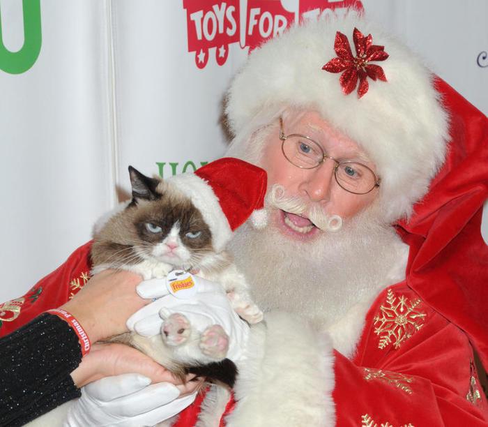 Grumpy Cat | Il gatto più cliccato di internet / Image 8