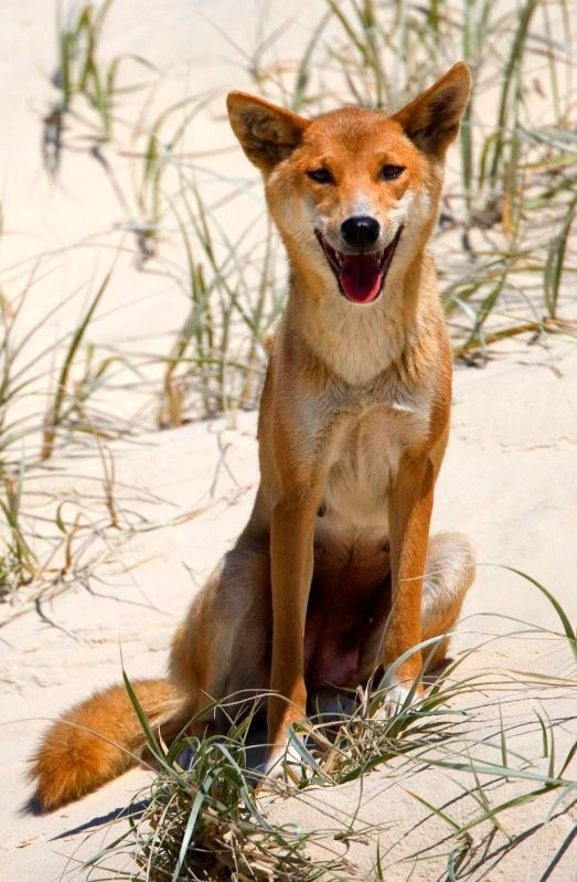 Animali che sorridono: i più simpatici dal regno animale / Image 8