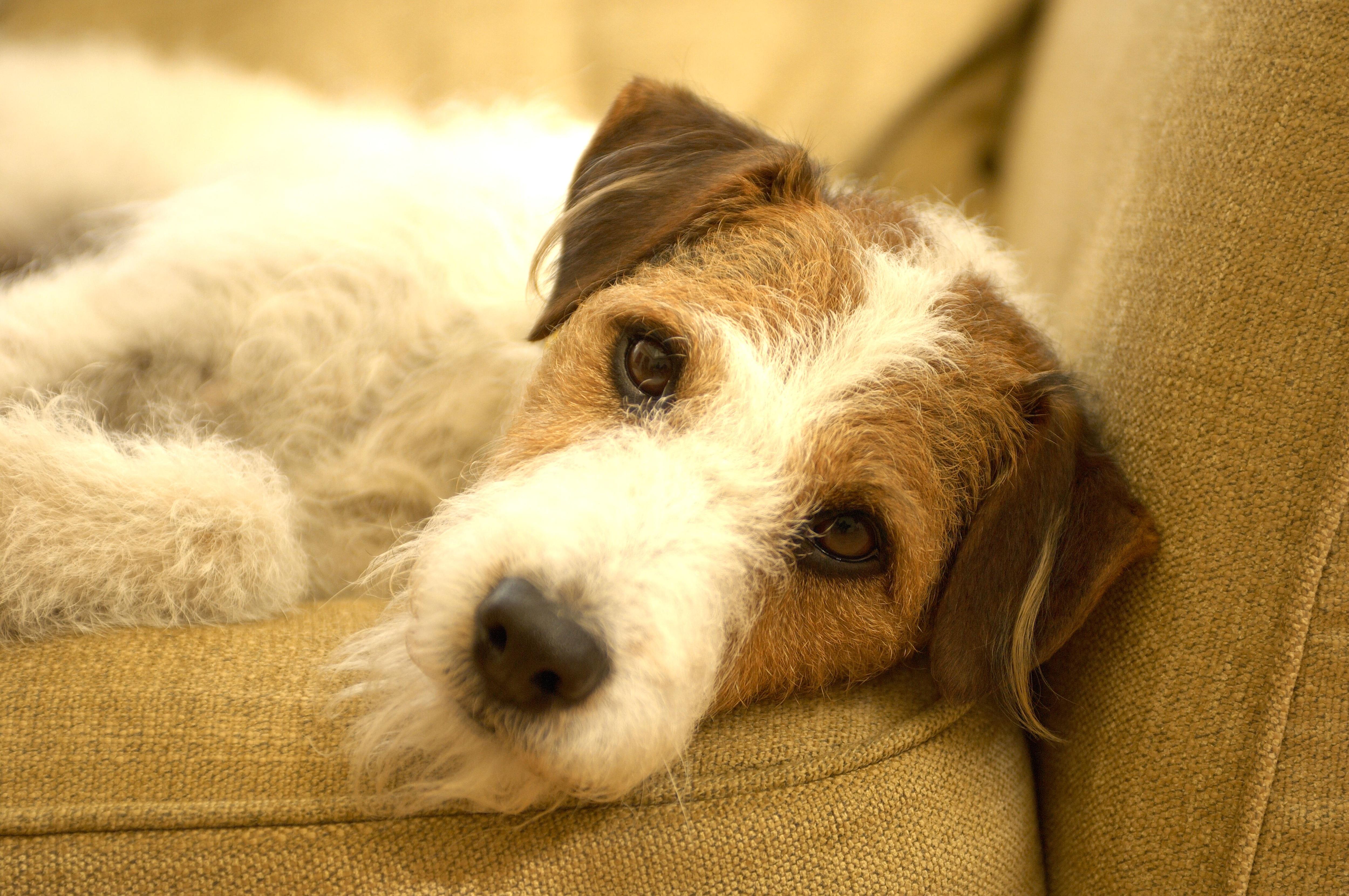 5 cose che non sai sui cani