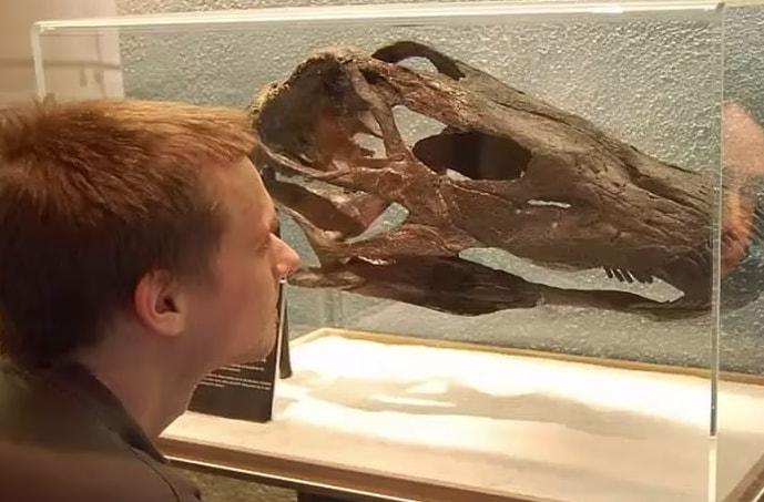 Torino, scoperto un nuovo dinosauro: si chiama Max e ha il collo lunghissimo!