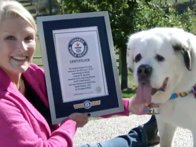 18,58 centimetri | È americano il cane con la lingua più lunga del mondo!