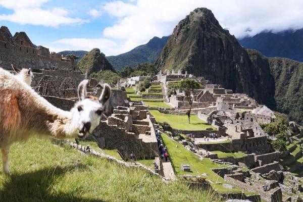 Photobomb | I 15 migliori scatti del regno animale