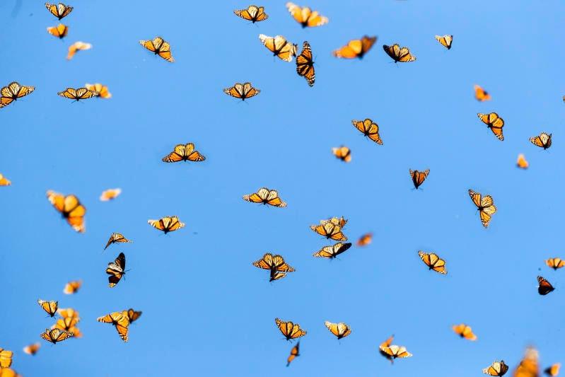 5 cose che non sai sulle migrazioni degli animali