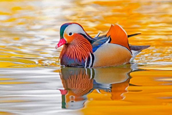 Che strani questi uccelli! | Gallery