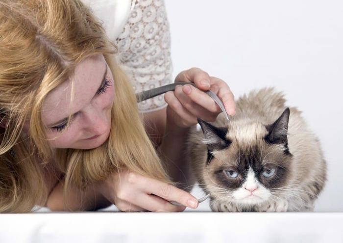 Grumpy Cat | Il gatto più cliccato di internet / Image 9