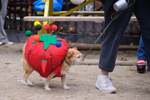 Halloween dog parade, New York