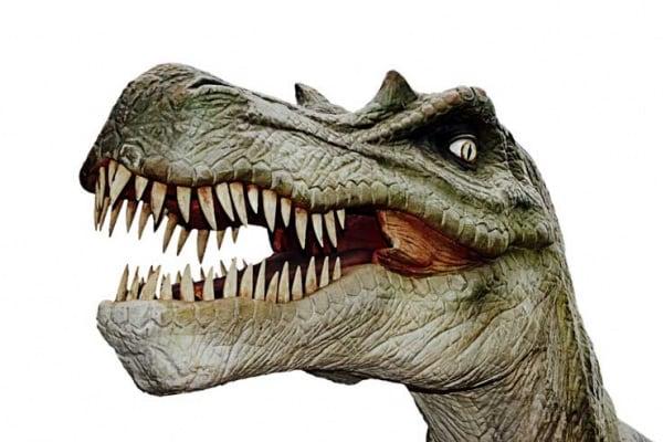 Lo sapevi che | Perché non esistono più animali grandi come i dinosauri?