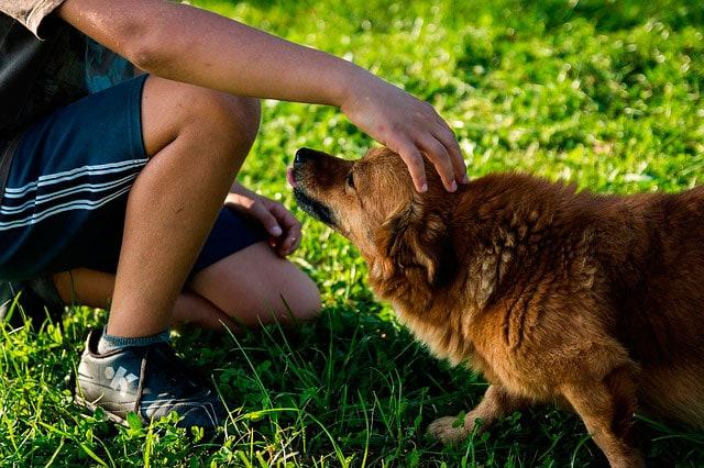 Adotta un cane (o un gatto) con Focus Wild | Blackie cerca casa