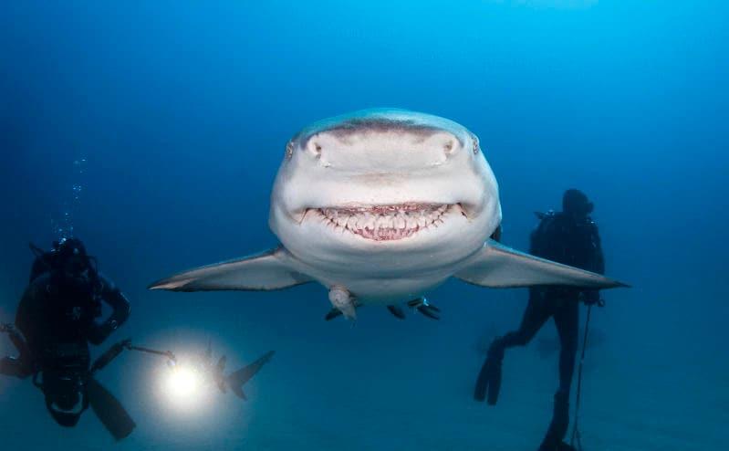 Animali che sorridono: i più simpatici dal regno animale / Image 10