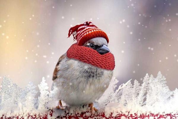 Come fanno gli uccelli a difendersi dal freddo?
