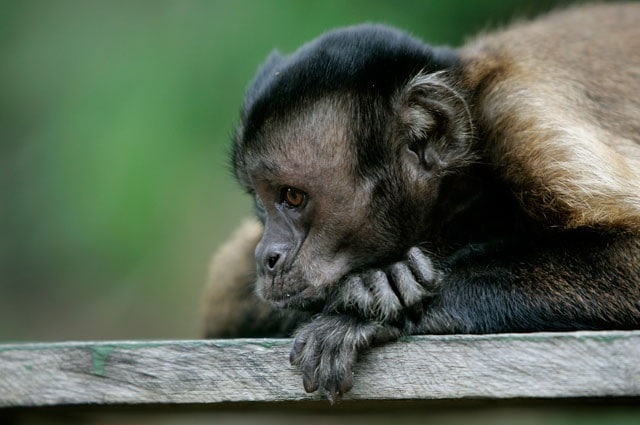 Gli animali più tristi. Cosa si può fare per consolarli?