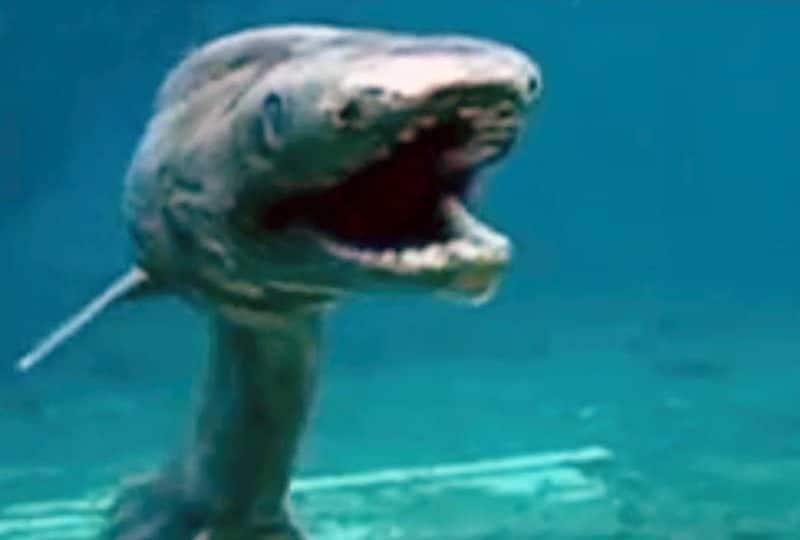 Lo squalo dal collare, un vero fossile vivente!