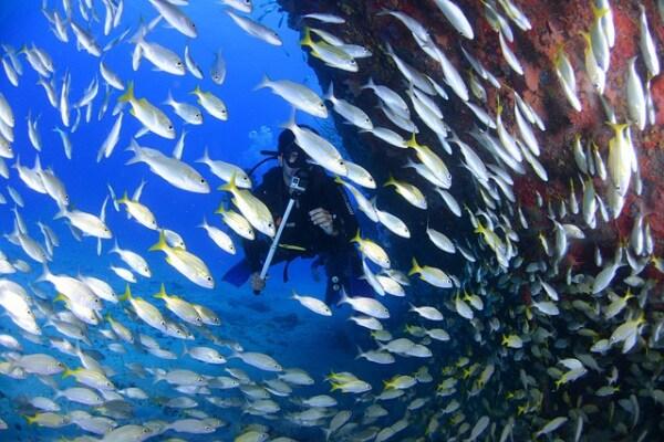 Giornata mondiale degli Oceani: salviamo il nostro futuro (con l'aiuto di un po' d'Italia!)