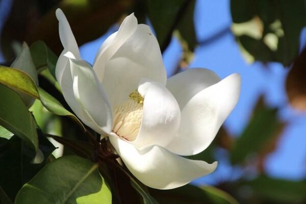 Il primo fiore del mondo è sbocciato 140 milioni di anni fa