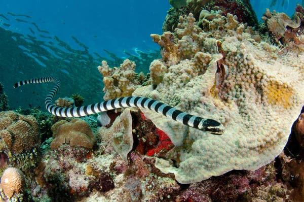 Il serpente di mare