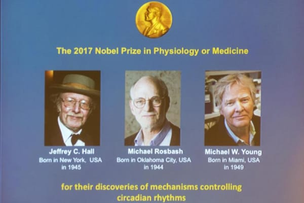 Il Nobel per la medicina 2017 a chi ha scoperto l'orologio biologico
