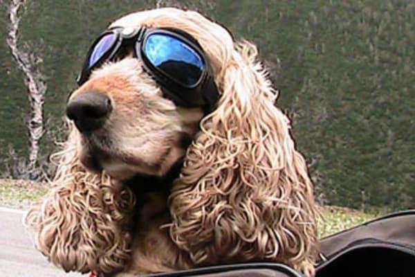Lola, il cane che correva per beneficenza