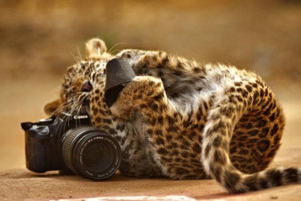 Che fotografi questi animali!