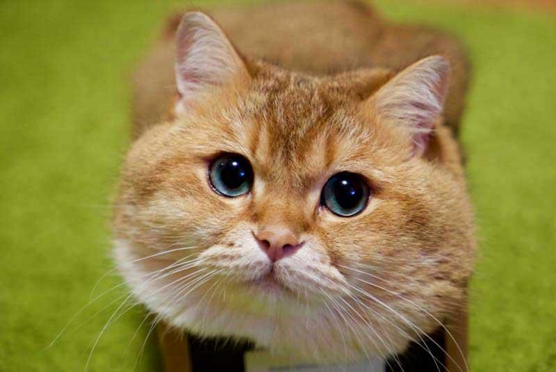 I baffi del gatto: in comunicazione con il mondo!