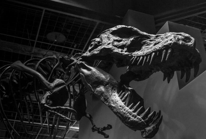 Giochi di dinosauri: gli otto più belli