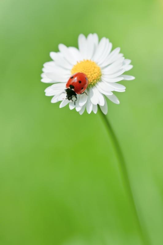 Animali che si svegliano in primavera |Gallery / Image 1