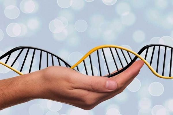 Il DNA | Che cos'è, come è fatto, a cosa serve