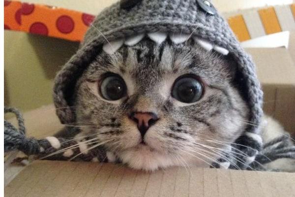 Le immagini dei gatti più famosi su Instagram