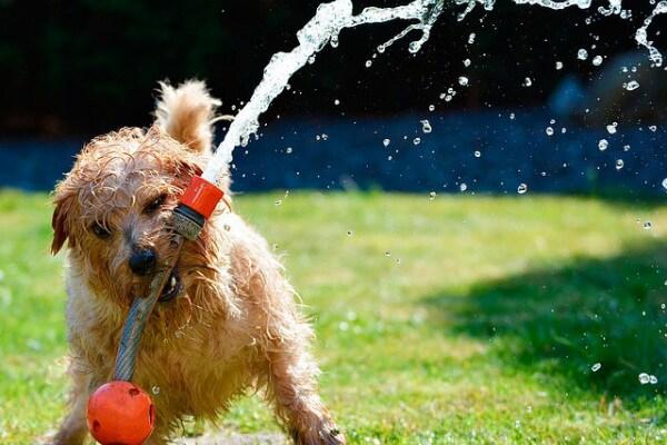 """Come difendere gli animali dal caldo? Scoprilo su Focus Wild """"Cane""""!"""