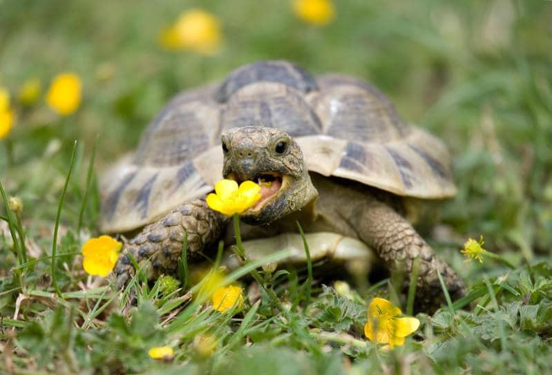 Animali che si svegliano in primavera |Gallery / Image 2