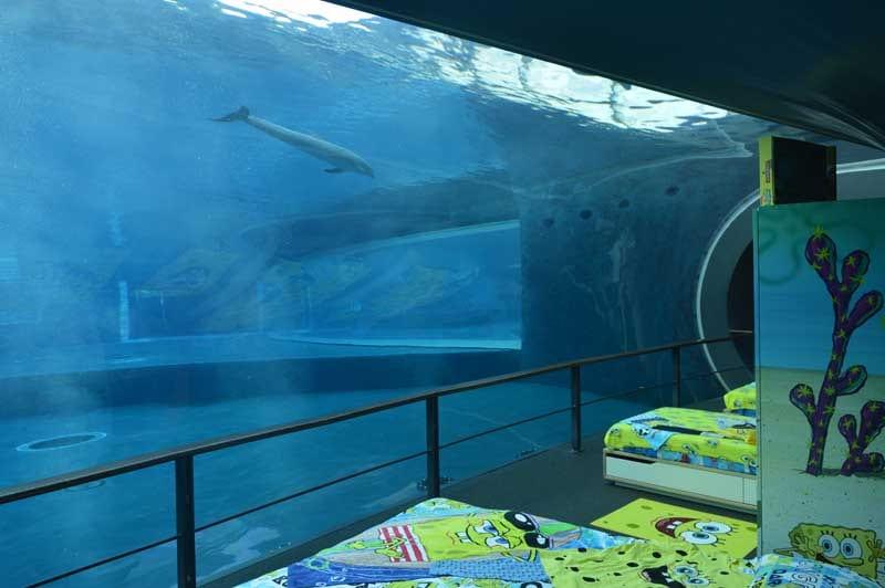 Vorreste passare una notte in compagnia dei pesci dell'acquario di Genova e di Spongebob?