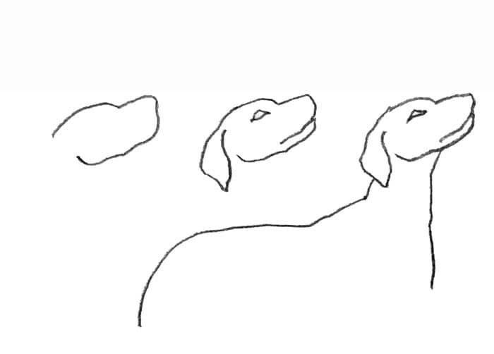 Laboratorio Di Disegno 8 Disegniamo Cane E Gatto Focus Junior