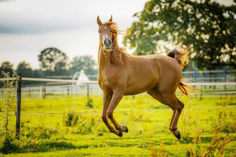 Junior reporter, storia e evoluzione del cavallo raccontate da Erika