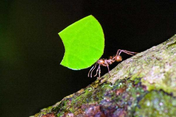 Formiche: al lavoro con i palloncini