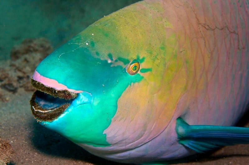Animali che sorridono: i più simpatici dal regno animale / Image 1