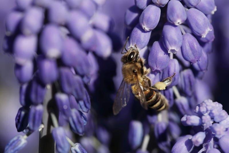 Animali che si svegliano in primavera |Gallery / Image 4