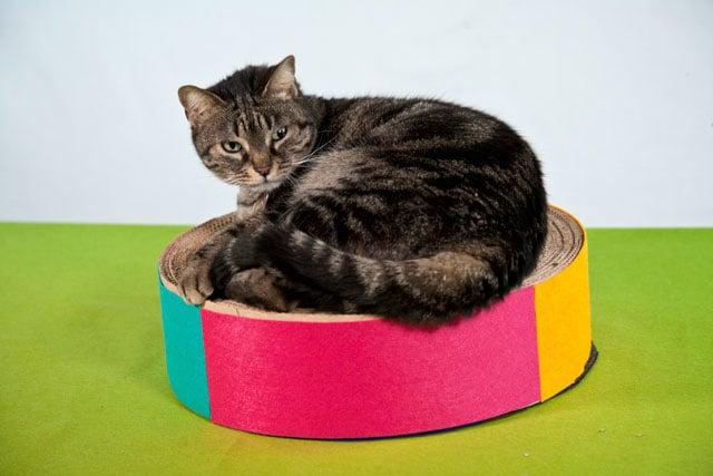 Focus Wild Lab: costruisci un tiragraffi per il tuo gatto