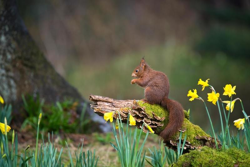 Animali che si svegliano in primavera |Gallery / Image 5