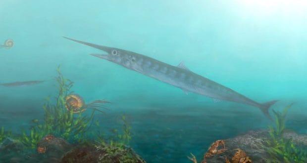 Scoperto fossile di pesce del Cretaceo grazie ad un turista di 10 anni!