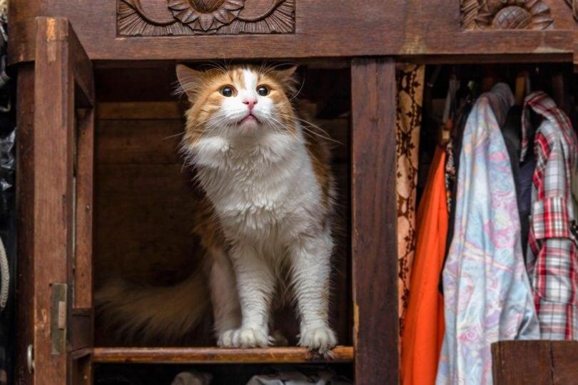 5 cose che non sai sui gatti