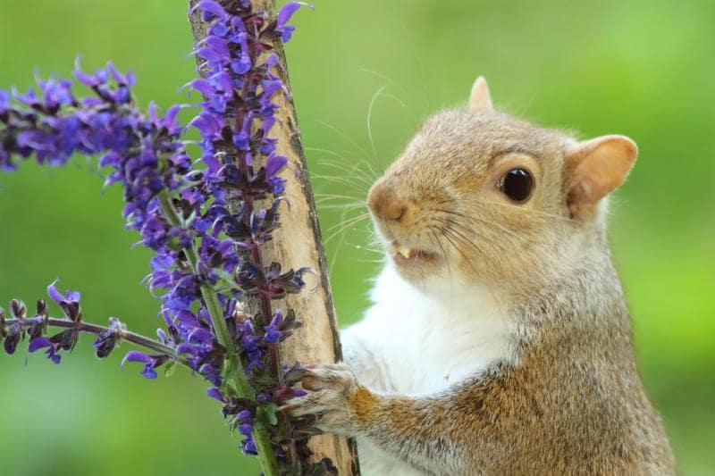 Animali che si svegliano in primavera |Gallery / Image 6