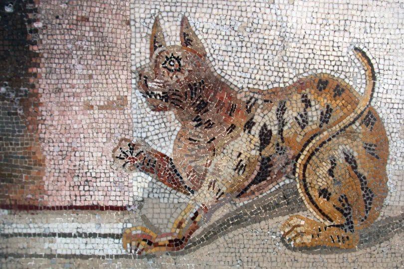 Scoperto un cimitero di animali in Egitto